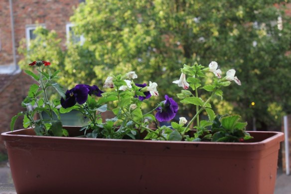 Windowsills flowers