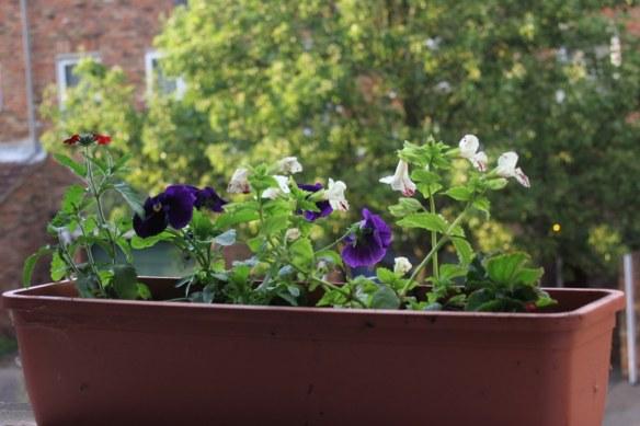 Windowsills flowers